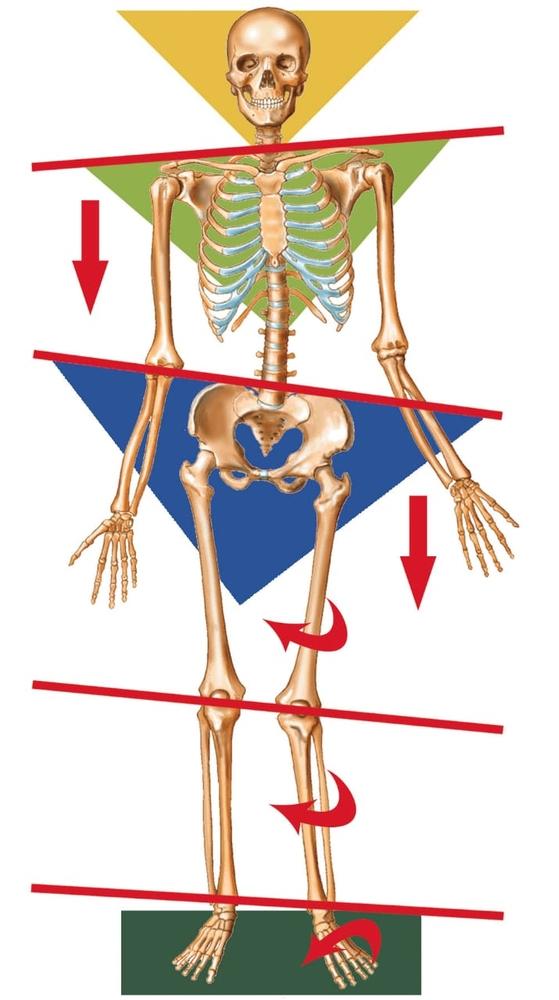 Индивидуaльныe анатомические стельки 4