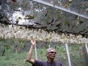 Готовый бизнес с  доходностью 500% Ферма Живых Тропических Бабочек